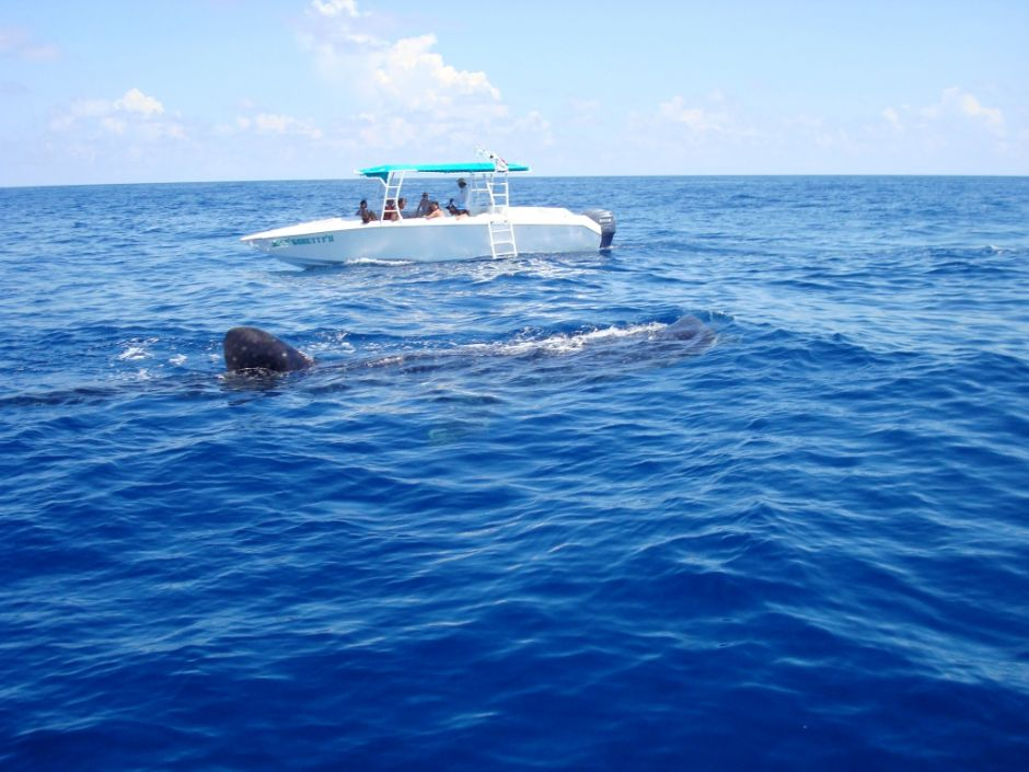 holbox nado con delfines