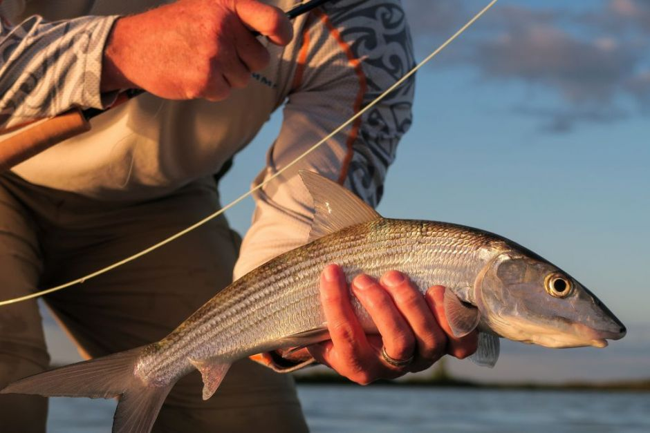 Basic Knowledge for Fly Fishing