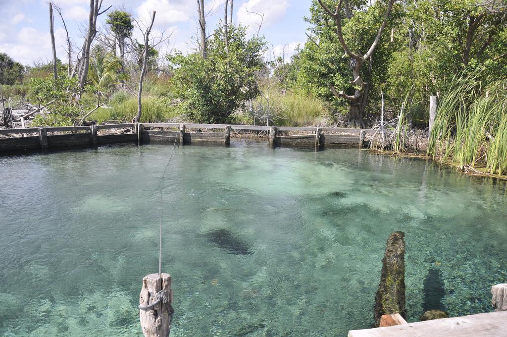Aguas traslucidas del Cenote Yalahau