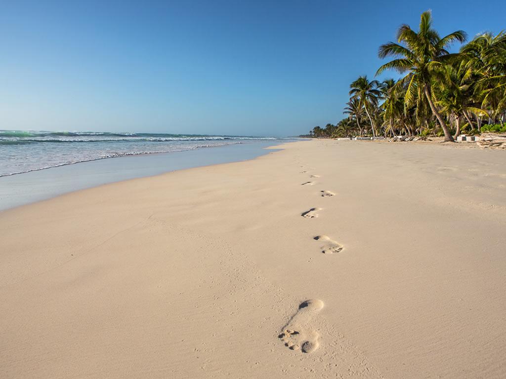 Playa Ziggy