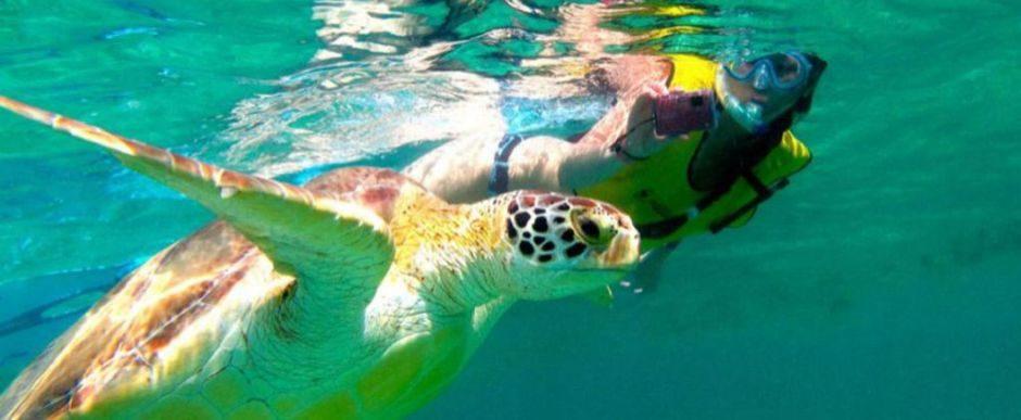 nado con tortugas